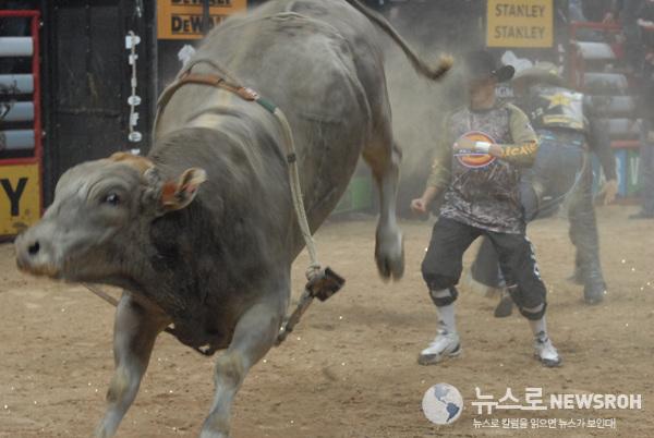 1 25.bull..jpg