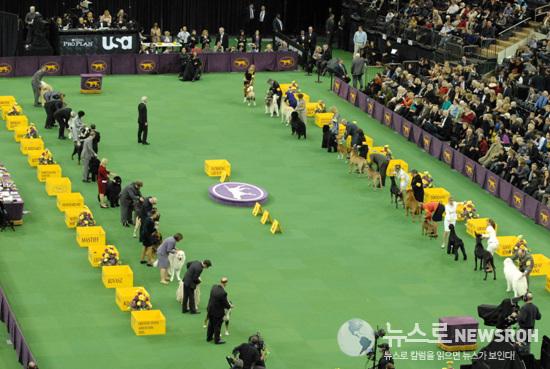 2013.2.12 Dog Show 429.jpg