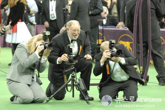 1. 참피온 독을 촬영하기 위해 주최측 사진사들이 진땀을 빼고 있다. 2013.2.12 Dog Show 909.jpg