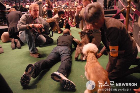 2010.2.16. Dog Show 219.jpg
