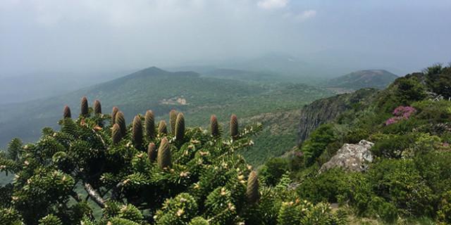 한라산 구상나무 숲.jpg