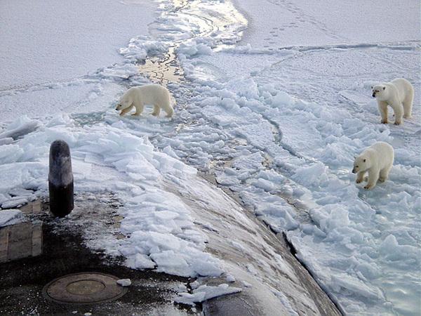 800px-Polar_bears_near_north_pole.jpg