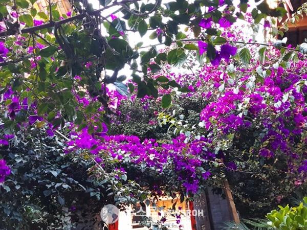 12월의 꽃1.jpg