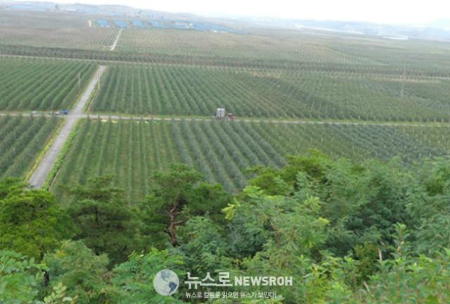 끝이 보이지 않는 대동강 과수종합농장 1000정보. 멀리 살림집들 너머에도 사과밭이 있다..jpg