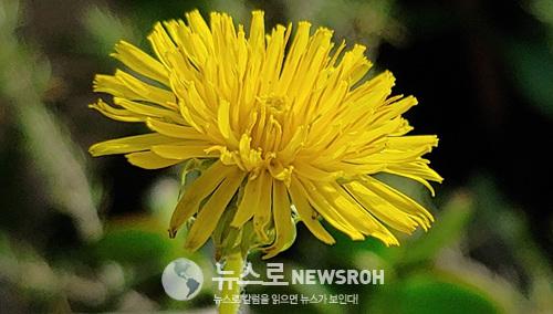 꽃모닝1.jpg