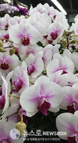 꽃시장5.jpg