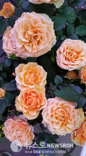 꽃시장12.jpg