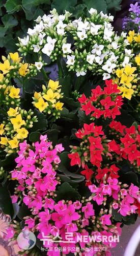 꽃시장13.jpg