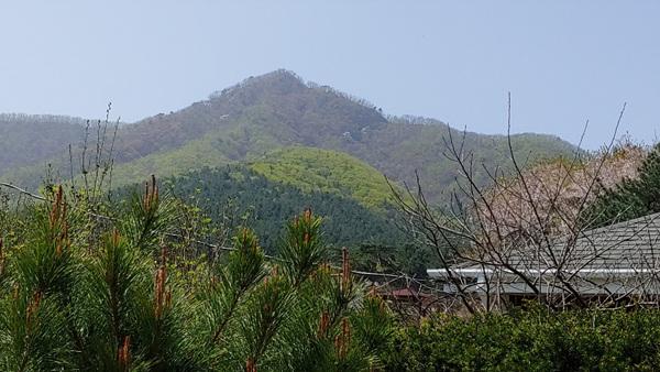 0422 봄오르는산.jpg