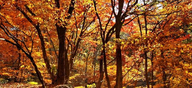 가을소묘11.jpg
