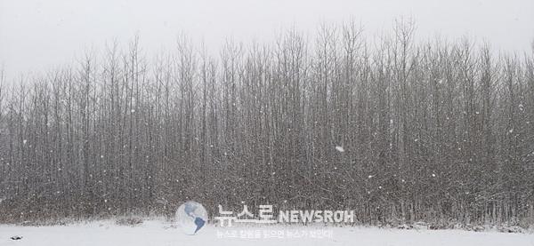 겨울소묘8-2.jpg